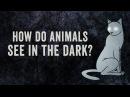 How do animals see in the dark - Anna Stöckl