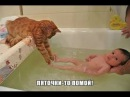 Самые смешные,улетные и прикольные кошки планеты и конечно же неудачные моменты