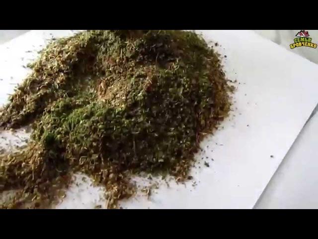 Семья Бровченко Рецепт вкусной приправы к любым блюдам из семян и зелени