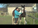Teaching Shoulder in and Haunches in Using Positive Reinforcement