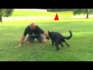 How to Play with Your German Shepherd Puppy