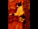 Моя кошка Даша