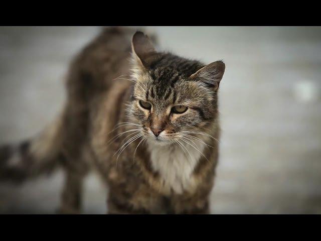 Кошки Джуманджи Животные в мегаполисе