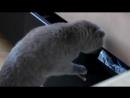 Подборка лучших и самых смешных приколов с котами 2017 видео про кошек и котов