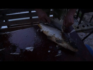 Филейный нож кузницы Эльбрус. чистка сазана.