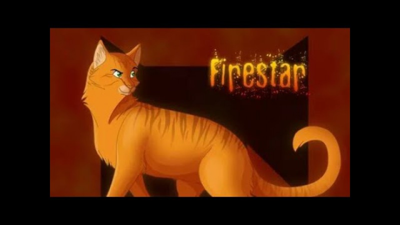 Коты Воители Клип Огнезвёзд Олимп заказ