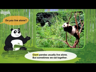 Meet the animals 26giant panda level 2 by little fox
