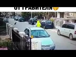Бездомная собака спасает женщину от грабителя.