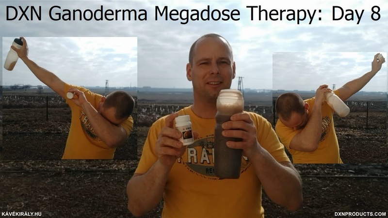 The Pirate who stole Ganoderma: DXN Reishi Mushroom Powder Megadose, Ganotherapy day 8