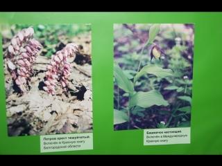 Ответ на вопрос к выставке «Про зелёные леса и лесные чудеса»