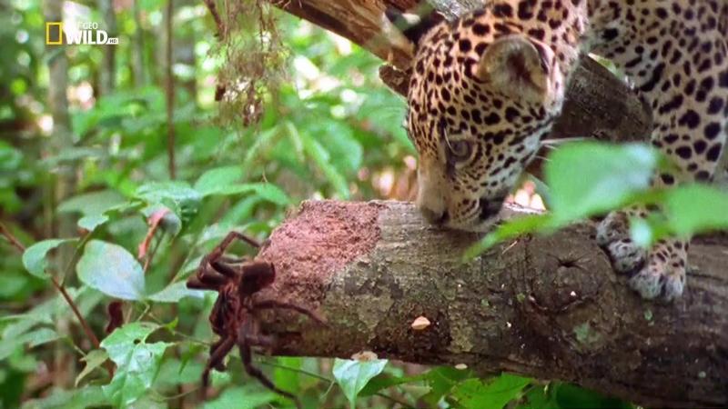 Малыши экстремалы Выжить в Амазонии