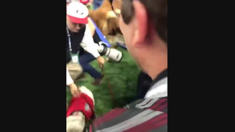 Bevo the Texas Longhorn charges at Uga the Bulldog