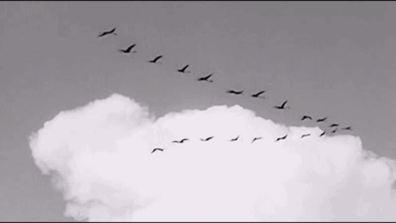 Картинки летят журавли анимация