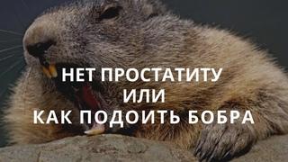 УСТРАНЯЕМ ПРОСТАТИТ БОБРОВОЙ СТРУЕЙ не убивая бобров.