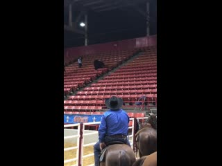Houston rodeo cow wants to be spectator in stands, not part of event