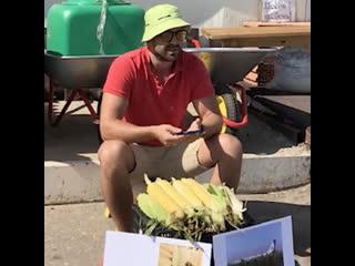 """Саратовец продаёт """"ту самую кукурузу"""" с подмосковного поля"""