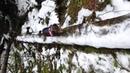 Natural Agility Dachshund Walking a Log