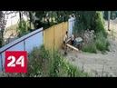 Чаплин отдыхает: двое подростков совершили кражу года на Кубани - Россия 24