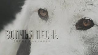ROOMBOOK || Герда Гавронек. Волчья песнь