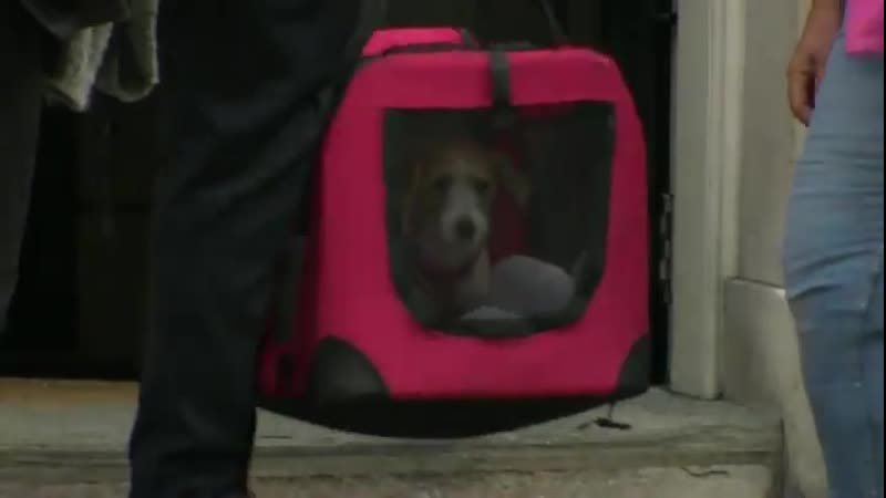 На Даунинг-стрит привезли собаку Бориса Джонсона