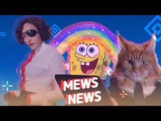 Mews News   Кот-экстремал, Мадонна и Яндекс