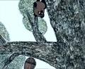 ☢ Приключение Винни Пуха