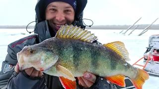 Дикие поклевки толстых, КИЛОГРАММОВЫХ ОКУНЕЙ! Зимняя рыбалка с ночевкой в комфорте. Вот это жор!