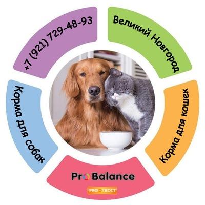 Средства от аллергии для собак и кошек купить в ветаптеке