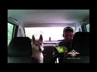 Полицейский вернул хозяину двух потерявшихся собак
