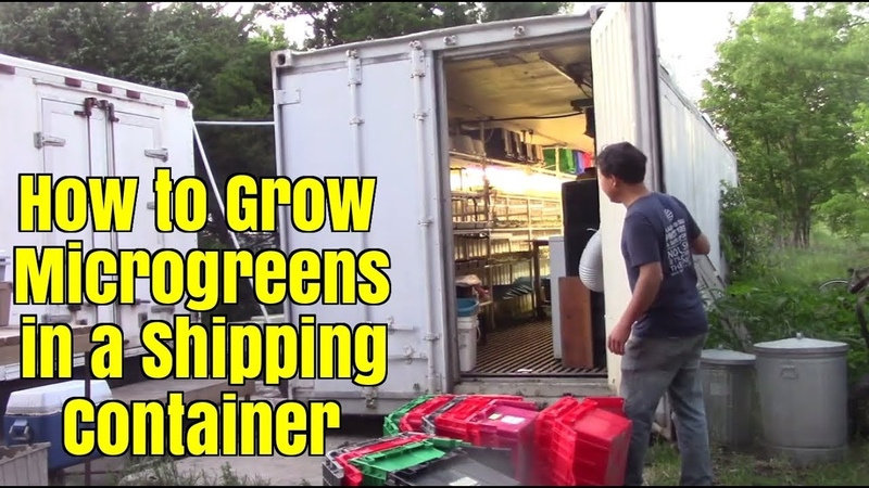 How to Grow Microgreens in a Shipping Container Farm