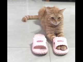 Кошки и шлепки