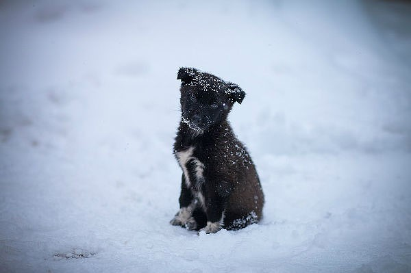 Картинки бездомные животные зимой