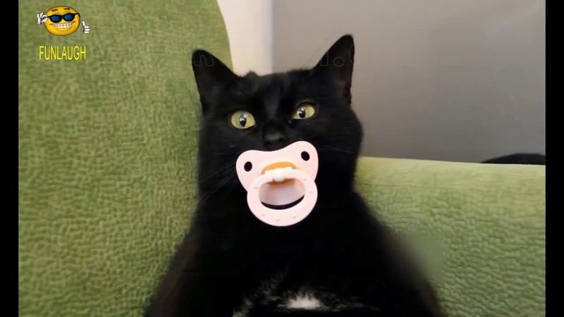Приколы с кошками и котами 2 Подборка смешных и интересных видео с котиками и кошечками