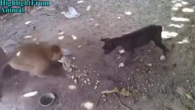 Отвесил щенку лещей