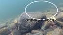 ТРИ ДНЯ НА ТАЕЖНОЙ РЕКЕ удачный день подводная съемка