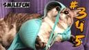 КОШКИ 2020 Смешные Коты 2020 Приколы С Кошками про Котов Funny Cats
