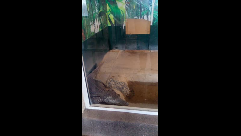 Узбекистанский крокодаил видео от ванька