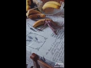 Чужой против банана. Часть 2.