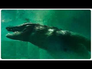 «мега крокодил _ mega crocodile» (2019)_ трейлер