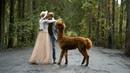 Свадебное видео   Свадебный клип   Свадьба с ламой   Видеограф Kate Borz на свадьбу