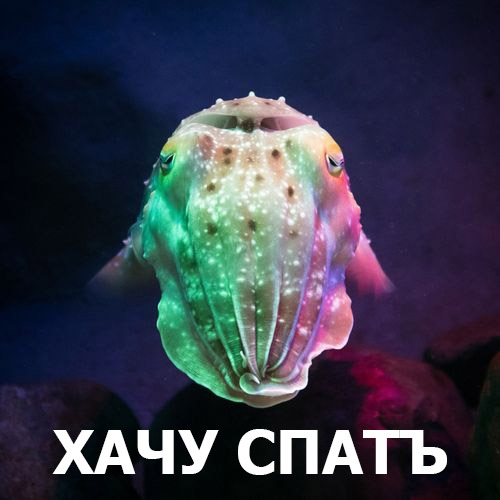 cute cuttle fish - HD1024×1024