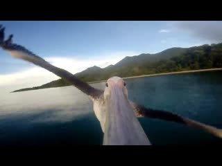 Pelican learns to fly with a gopro
