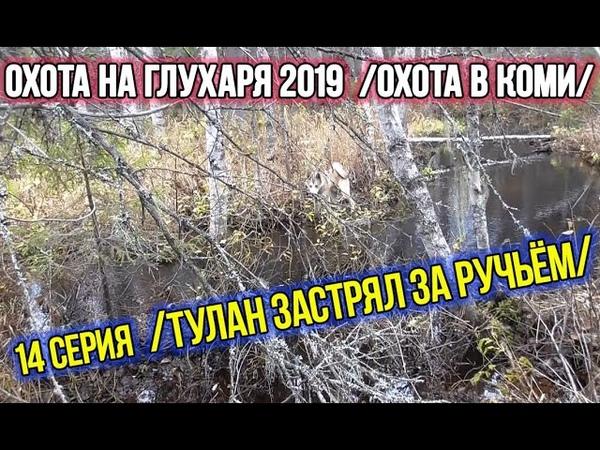 Охота на глухаря 2019 ✔️ Охота в Коми. 14 серия.