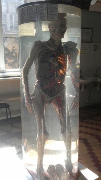 Институт анатомии.