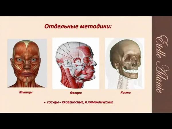 Остеопатические техники омоложения лица и тела 2 вебинар