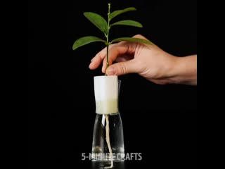 Как вырастить растения: