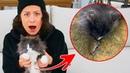 Киса Алиса наелась мышей и её рвёт! Ей плохо! Чем это грозит всем нам Что происходит с кошкой