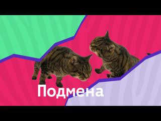 В Шереметьево кота не пустили на рейс из-за перевеса, но хозяин придумал лайфхак