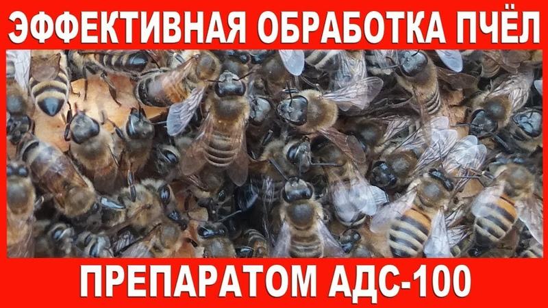 Эффективная обработка пчёл препаратом АДС-100 | Processing of bees ADS-100