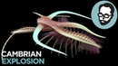 The Cambrian Period: Life's Prototype Stage | Random Thursday